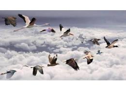 赏生态摄影之美 护候鸟迁徙之路