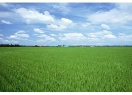企业社会创新-新希望集团:金融担保解决农户资金难题
