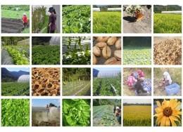 可持续农业-光原社会企业:深耕原住民有机农业